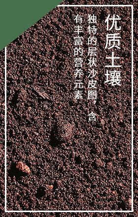 沂源红苹果需要优质的土壤